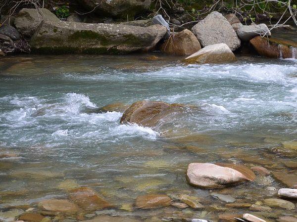 Усатый монстр горной речки