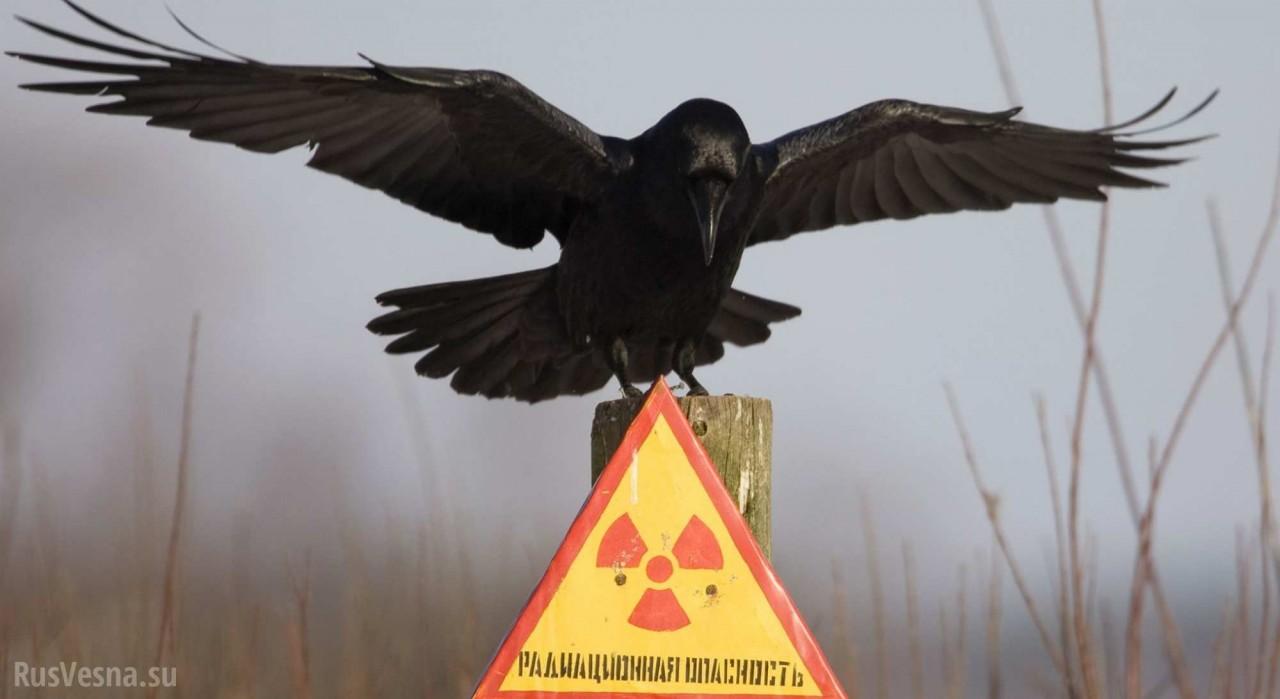 Чернобыль 2.0: Украина отравит весь мир