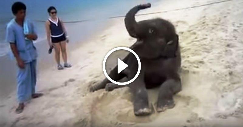 Слоненок впервые увидел океан и пляж, и просто не в силах сдержать свой восторг