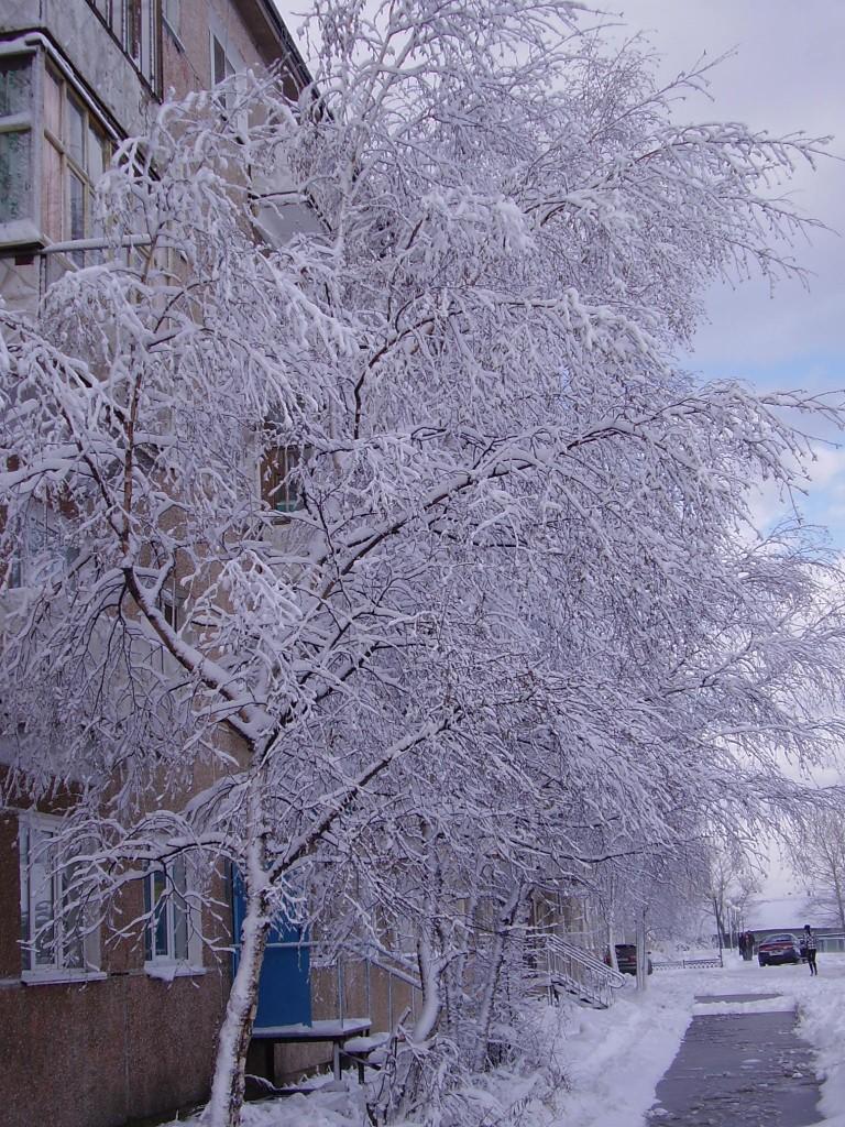 Все деревья в серебре