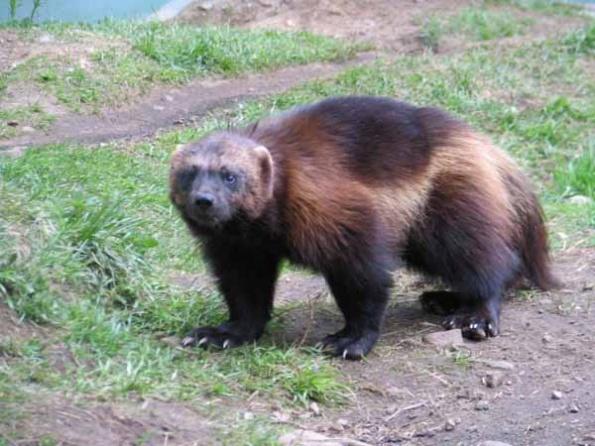 Картинки по запросу олекминский заповедник животные фото