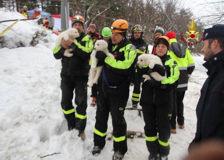 Пять дней в ожидании спасения: в накрытом лавиной отеле в Италии нашли трёх щенков