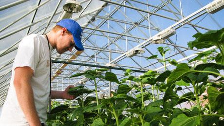 Селекционеры вывели овощи сореховым вкусом
