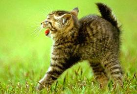 ипуганный котенок