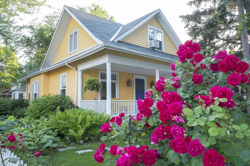 3 способа разведения плетистой розы: благоухающий аромат цветка наполнит весь сад