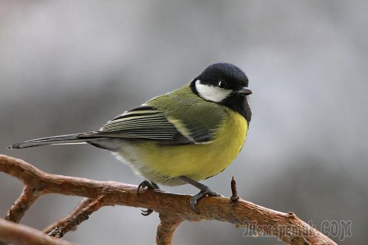 самые умные птицы