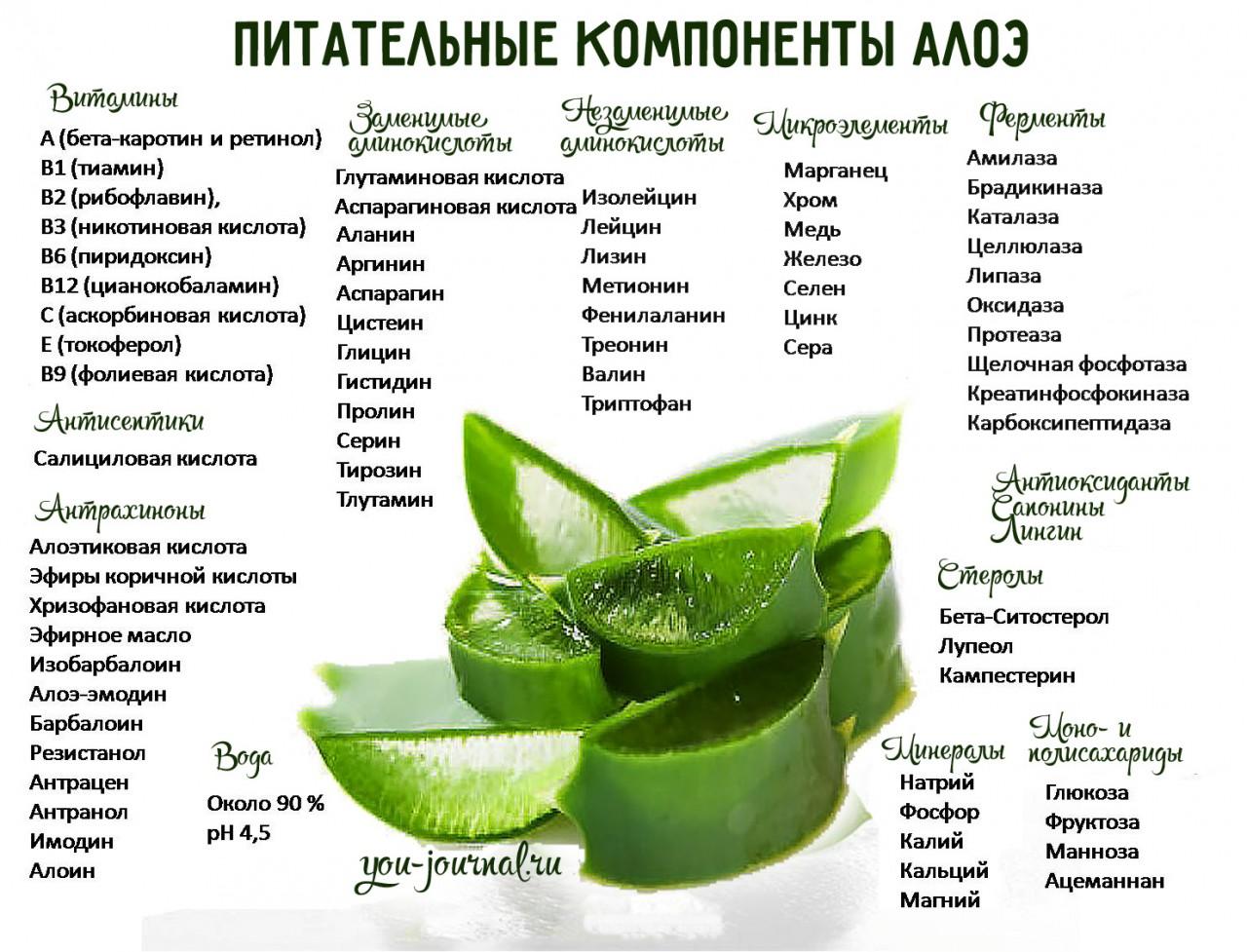 Алоэ вера лечебные свойства рецепты