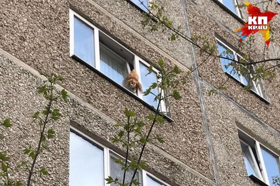 На Урале спасли жирного кота, застрявшего в окне