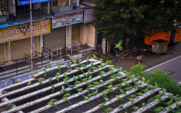 Столовая для 4000 попугаев животные, птицы, факты