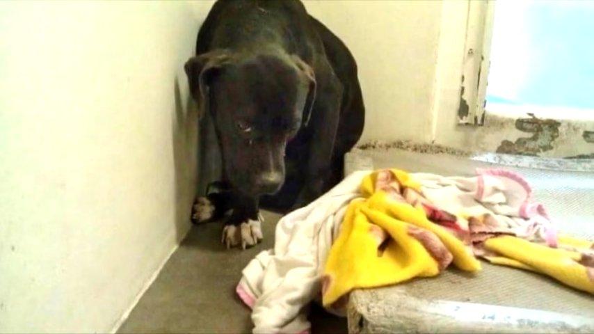 Когда пес попал в приют, он боялся каждого шороха: ему грозила эвтаназия