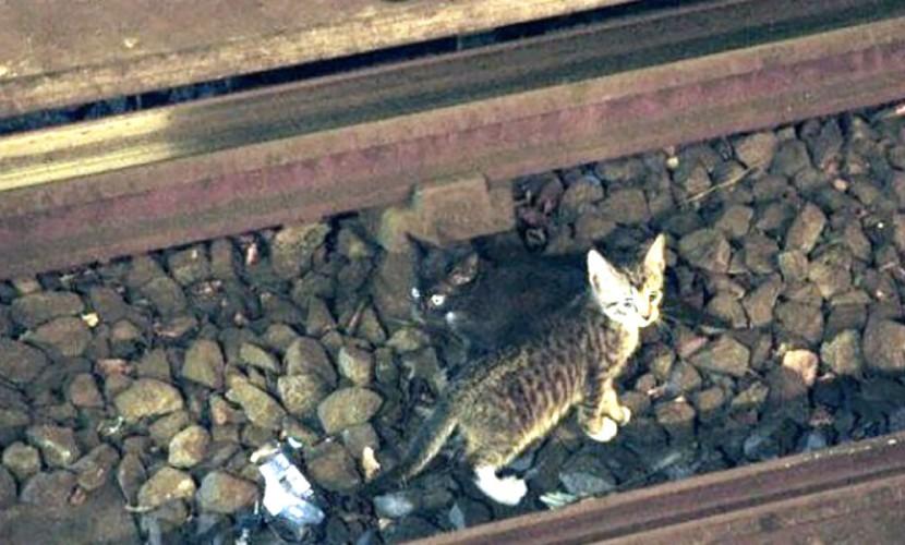 Добрый машинист остановил поезд московского метро из-за котенка на путях