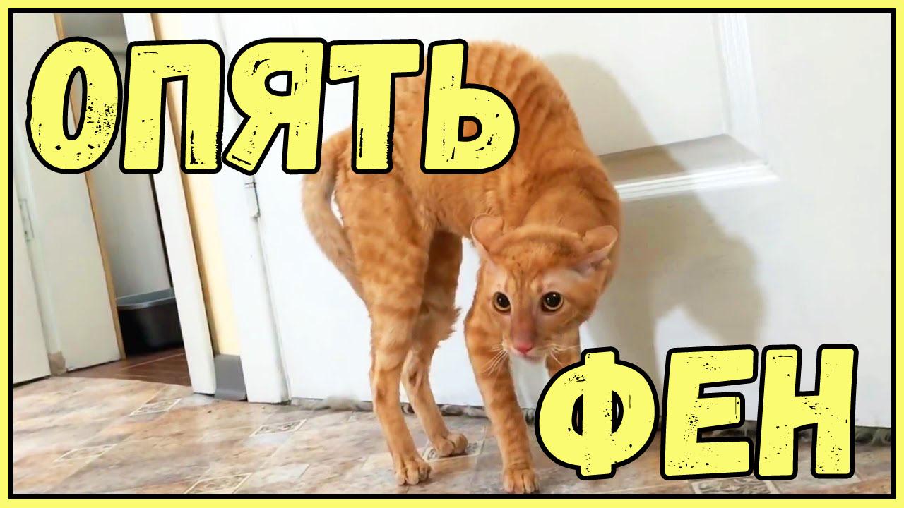 Забавная подборка видео с котами