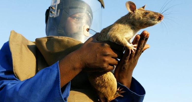 В Йоханнесбурге (ЮАР) гигантская крыса съела трехмесячного ребенка