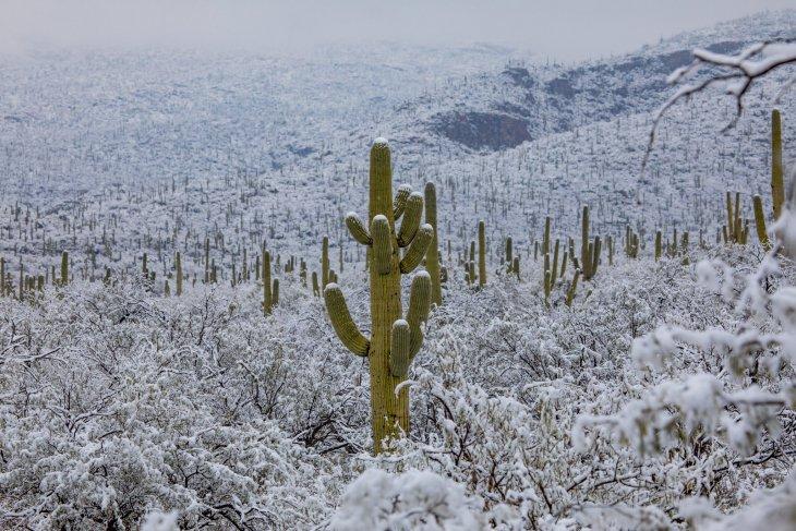 Шутки природы: жаркая пустыня Сонора в снегу