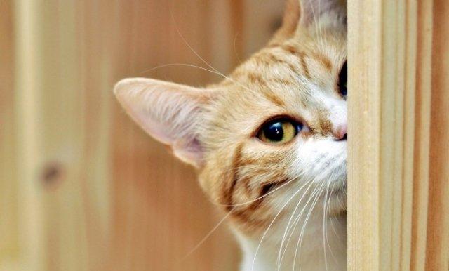 35 фото о том, как ведет себя ваш кот, пока вас нет дома