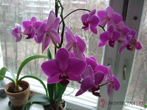 Садовые цветы каталог с фотографиями и названиями фотографии