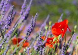 Засухоустойчивые растения: красиво и легко