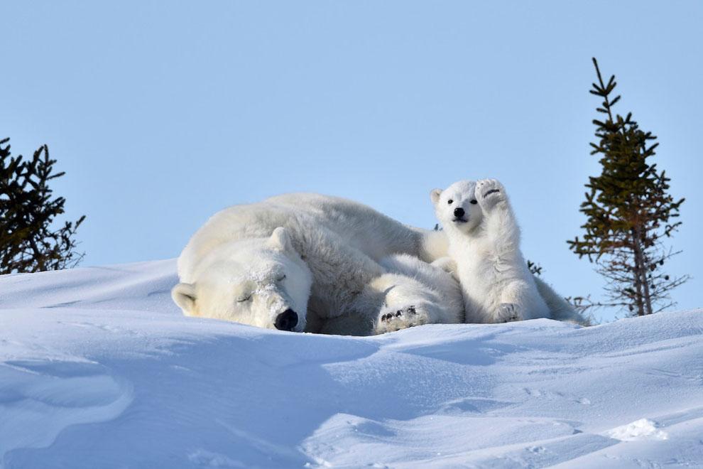 Подборка фото номинантов премии «Самые смешные фото дикой природы 2016»