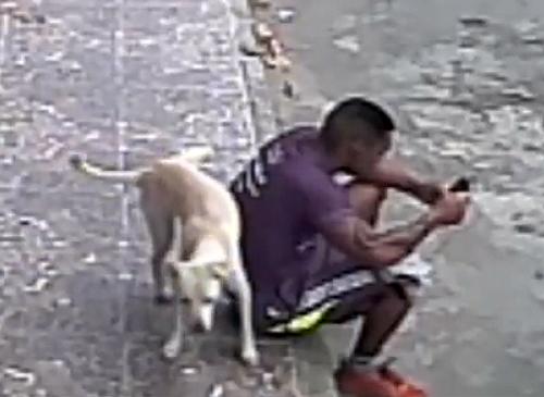 Бездомная собака пометила парня, как свою территорию. Теперь они лучшие друзья