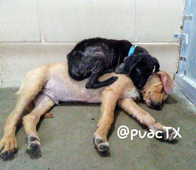 Два щенка впервые встретилис…