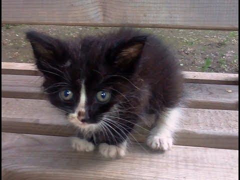 Трогательная история бездомного котенка Тимки
