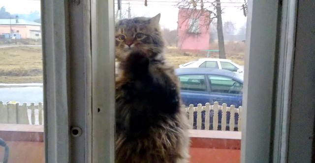Бездомная беременная кошка забежала в квартиру, чтобы родить котят