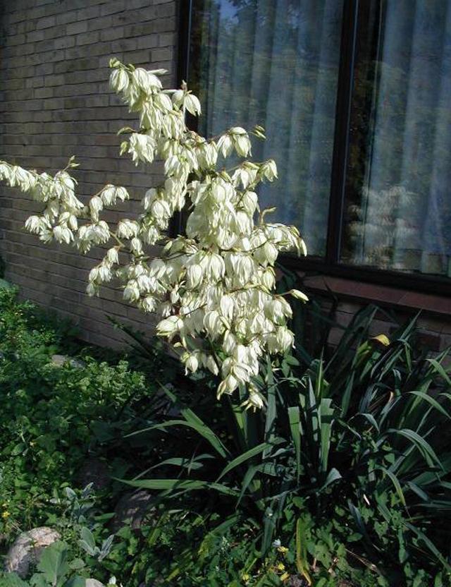 Какие южные растения можно в…