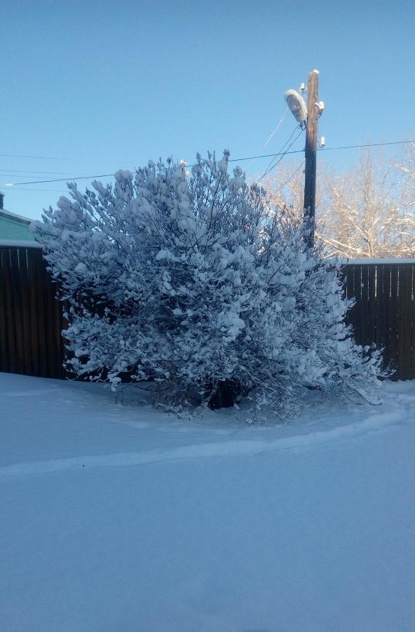 Сказочные пейзажи в январе. Камчатка.
