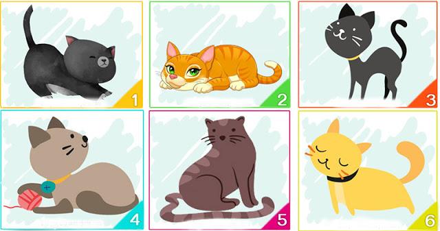 Тест: кошка, которую вы выберите, расскажет многое о вашей личности