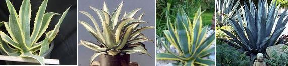 Ядовитая красота. Опасные растения и первая помощь.