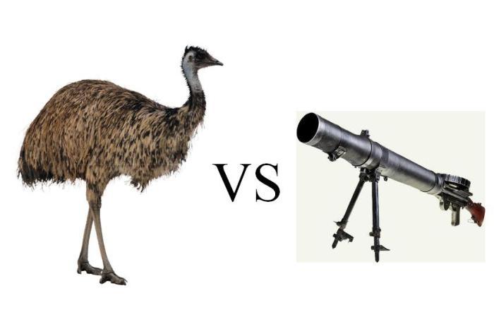 Страусы против пулемета, или Война с неожиданным финалом