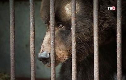 Власти Москвы спасут брошенных животных кинозверобазы в Леоново