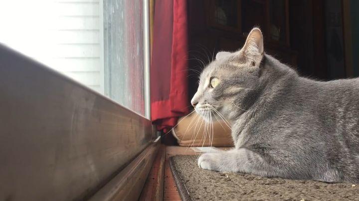 Кот выражает своё недовольство назойливыми птицами самым очаровательным образом