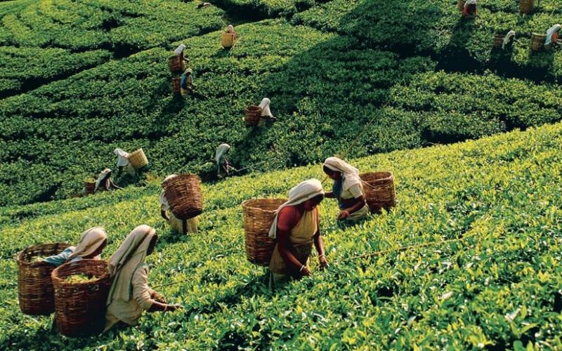ЦейлонГоды существования: с 1505 по 1972 гг.Эта страна, расположенная в Южной Азии, ныне известна как Демократическая Социалистическая Республика Шри-Ланка. Цейлон имел богатую историю международных отношений, будучи с 7 века торговым центром для арабов, а после для европейцев. Цейлоном поочередноправили португальцы, затем голландцы и, наконец, британцы, от которых Цейлон обрел полную независимость в 1948 году. В 1972 году Цейлон сменил название на Шри-Ланка.