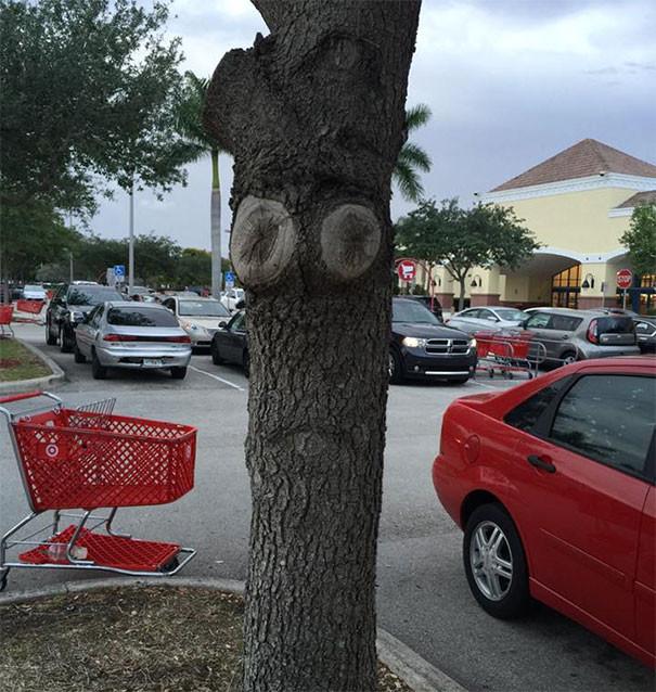 Дерево в депрессии парейдолия, похоже да не то же, похоже на лицо