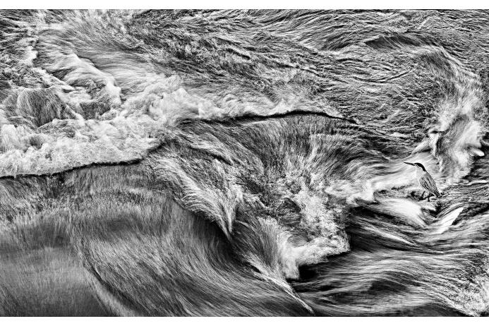 Львиная шкура напоминает разливы рек — столь причудливые формы она приобрела в объективе фотографа Генриха ван ден Берга