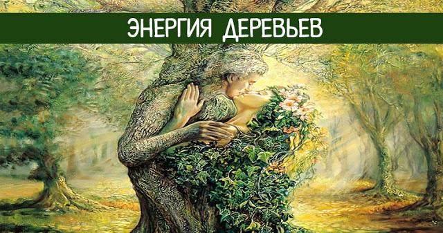 Энергия деревьев. Лесные доноры и вампиры