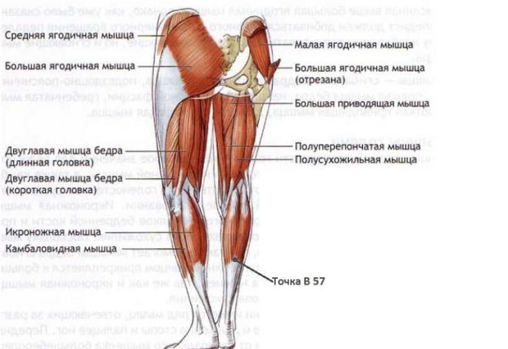 Точечный массаж при судорогах ног: техника выполнения