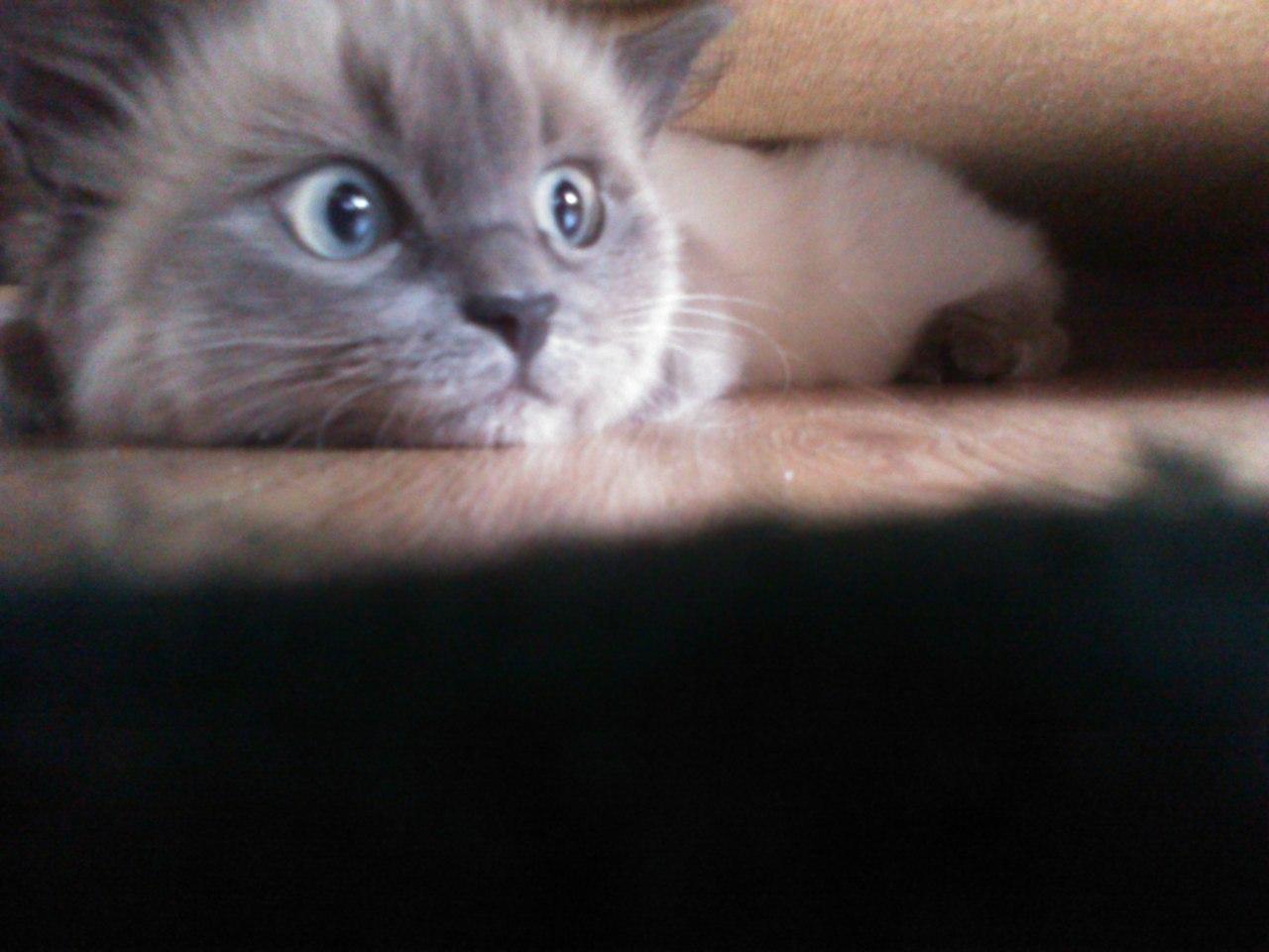 Наш котюня