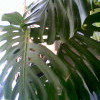 Растения монстры