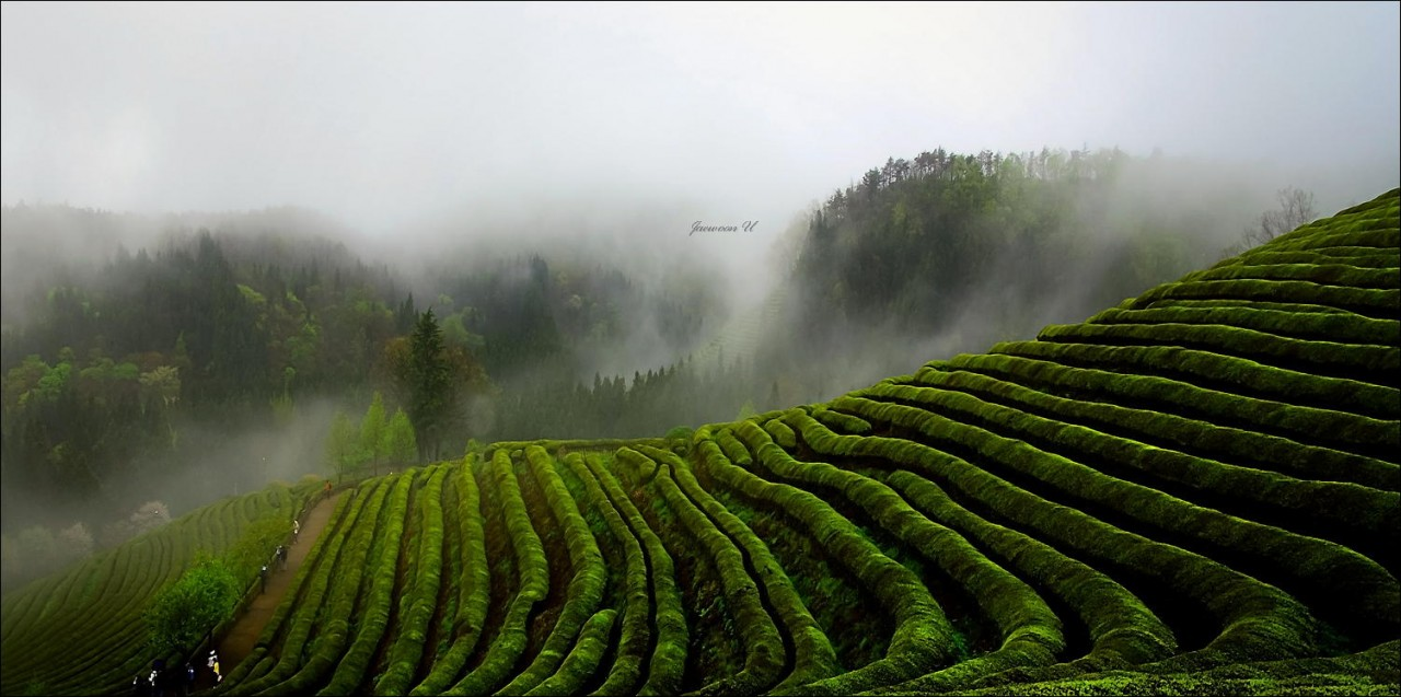 Фотография Misty green field автор Jaewoon U на 500px