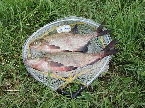 Ловля в конце весны на водохранилищах