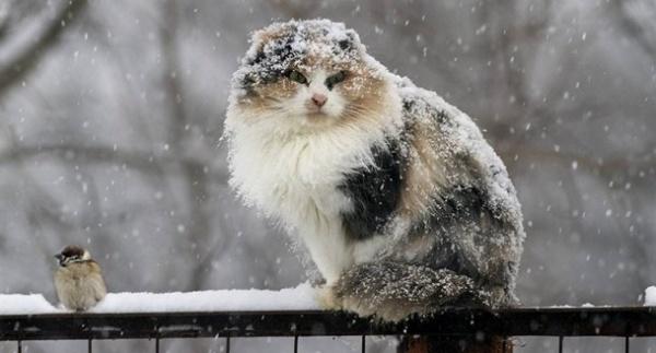 Метеобюро: ВПодмосковье выпал первый снег