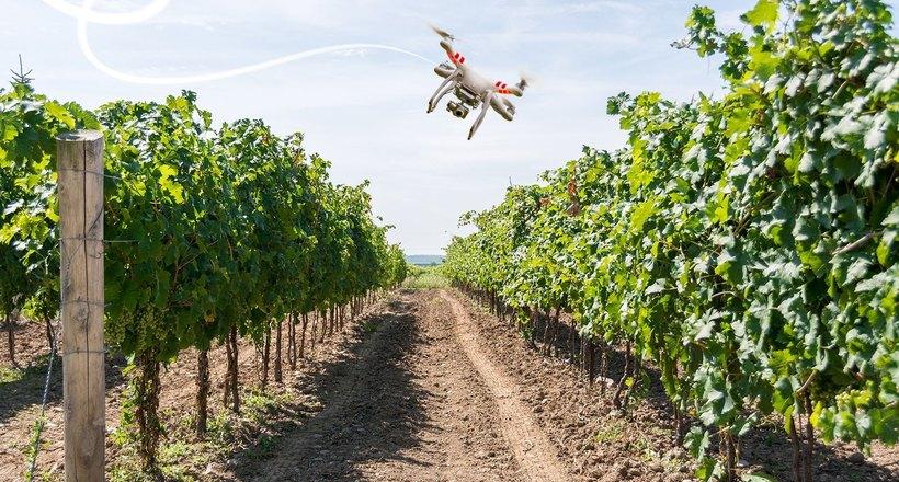 Картинки по запроÑу БеÑценные Ñотрудники: как дроны помогают выращивать лучший виноград