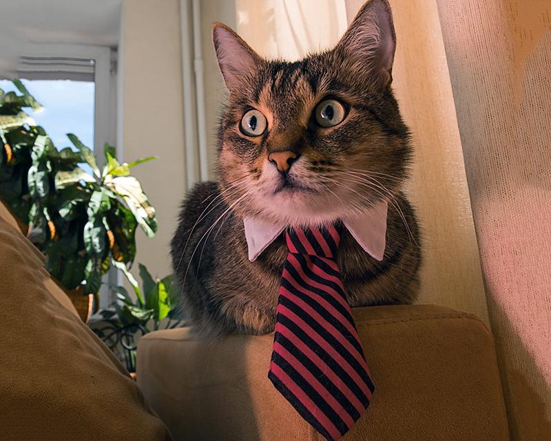 Заработай на «Вискас» сам: в Нижнем Новгороде открыта вакансия для кота