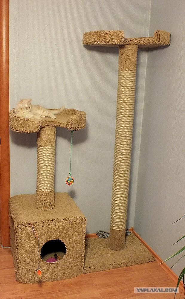Как сделать в домашних условиях домик для котика