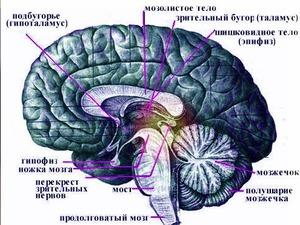 http://img.zzweb.ru/img/829800/melatonin-epifiz.jpg
