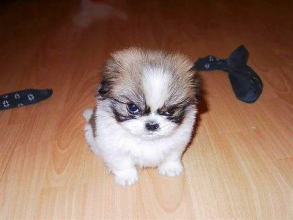 18 злобных животных, которые так смешны в своём гневе