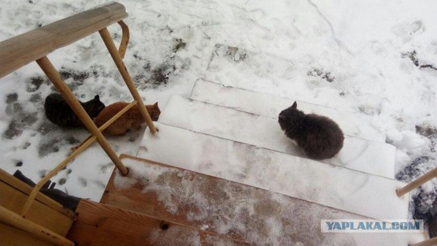 Дача зимой или неожиданный «сюрприз»