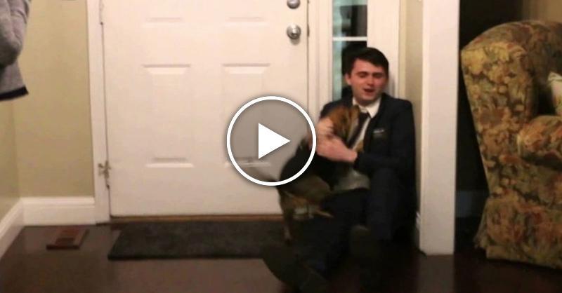 Реакция собаки, которая не видела хозяина 2 года
